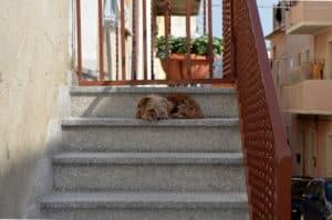 dog climbing downstairs