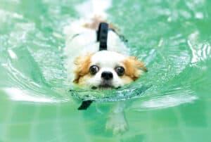 Dog swimming.