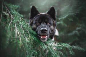 wild dog
