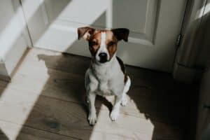 dog door.
