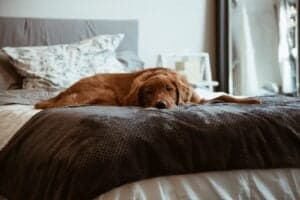 Dog laying on bed.