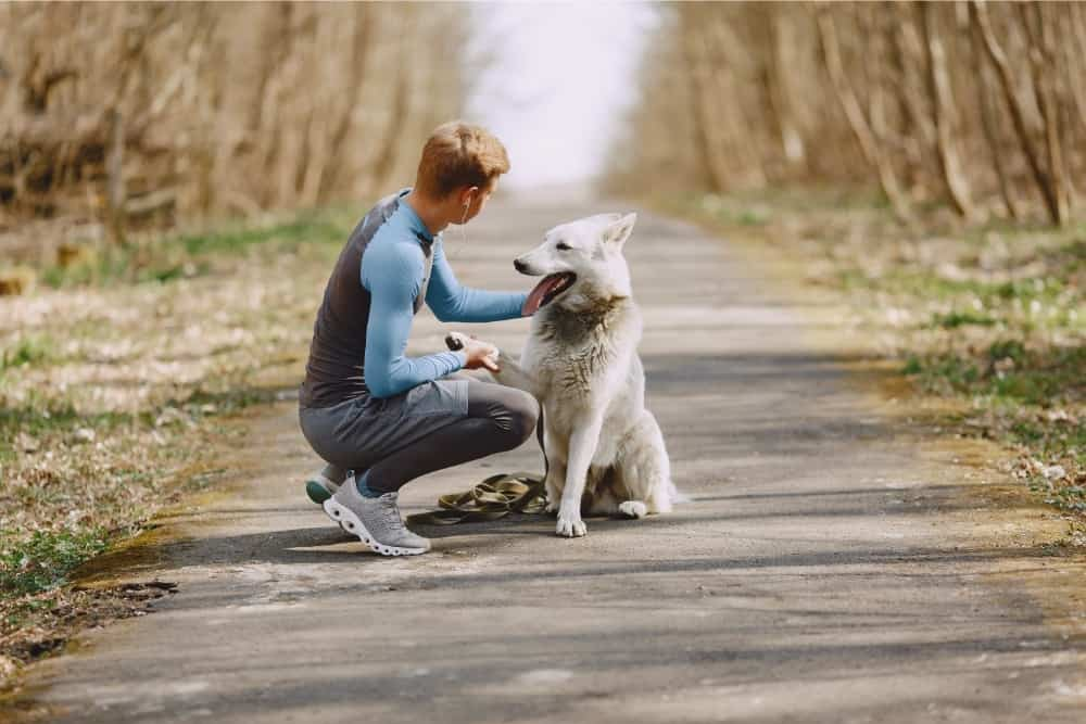 How to Tell if Your Dog is at a Healthy Weight