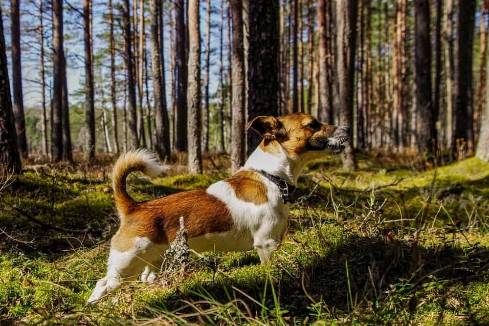 What Do Dogs Eat in the Wild?