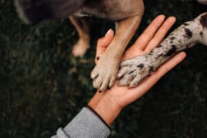 picture of a dogs paw