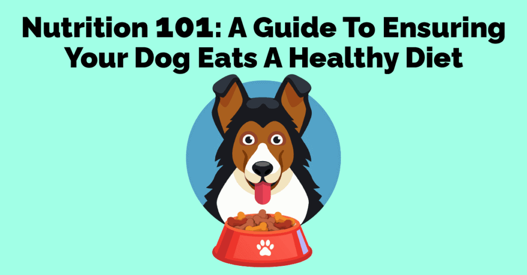 Nutrition 101 A Guide To Ensuring Your Dog Eats A Healthy Diet