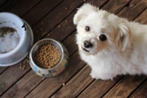 Dog eating kibble.